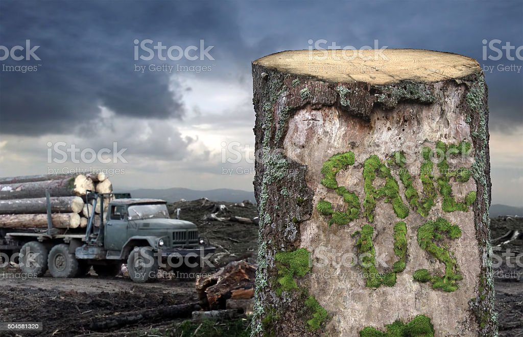 Save the trees! stock photo