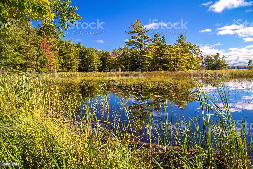 Save The Wetlands stock photo
