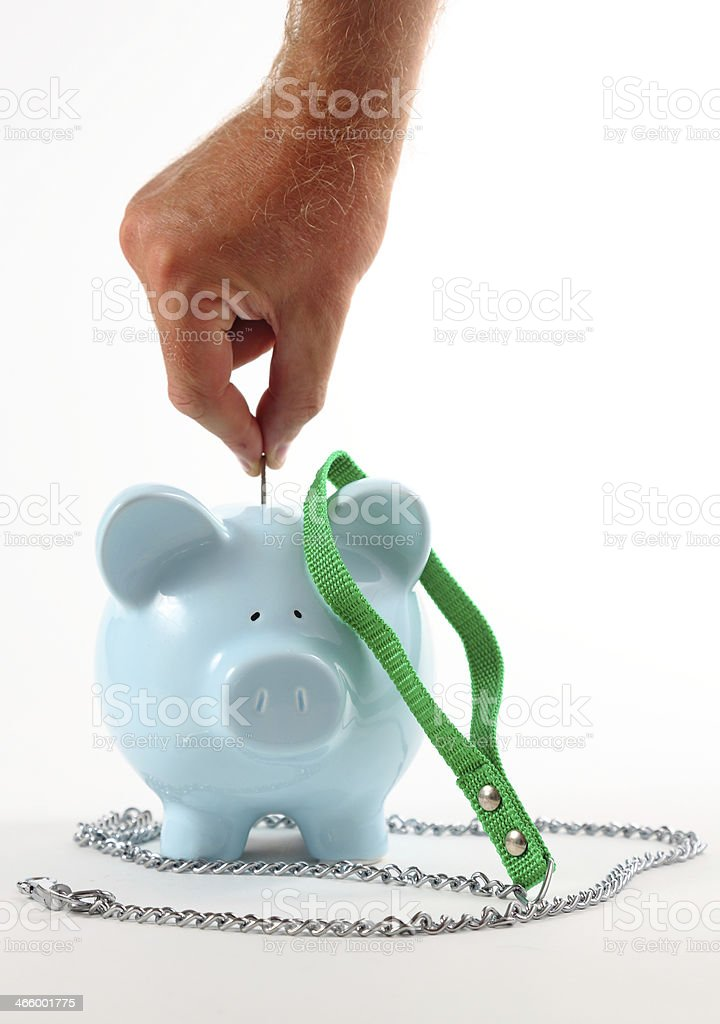 Saving for Pet Imsurance royalty-free stock photo