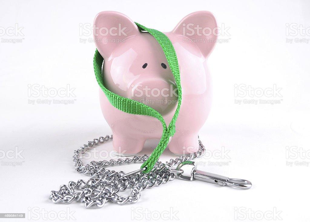 Saving For Pet Insurance stock photo