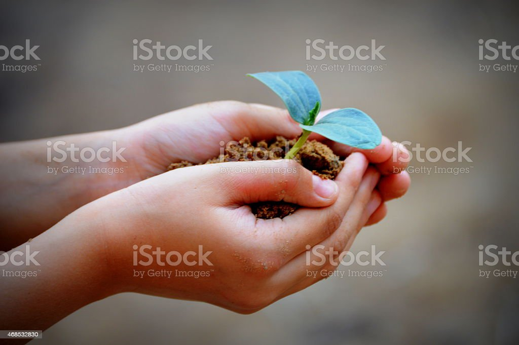 saving trees and and plants with your hands and planting more. stock photo