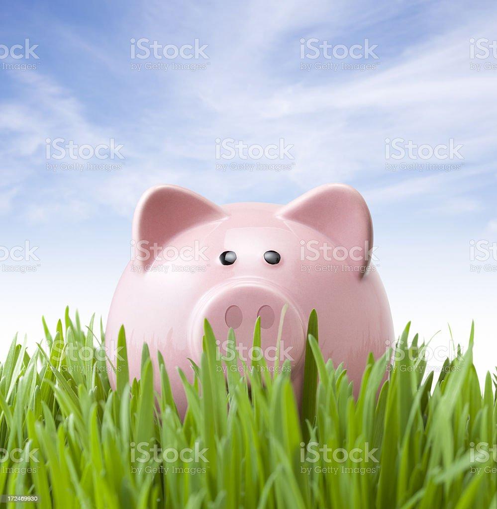 Savings. Piggy bank on grass. royalty-free stock photo