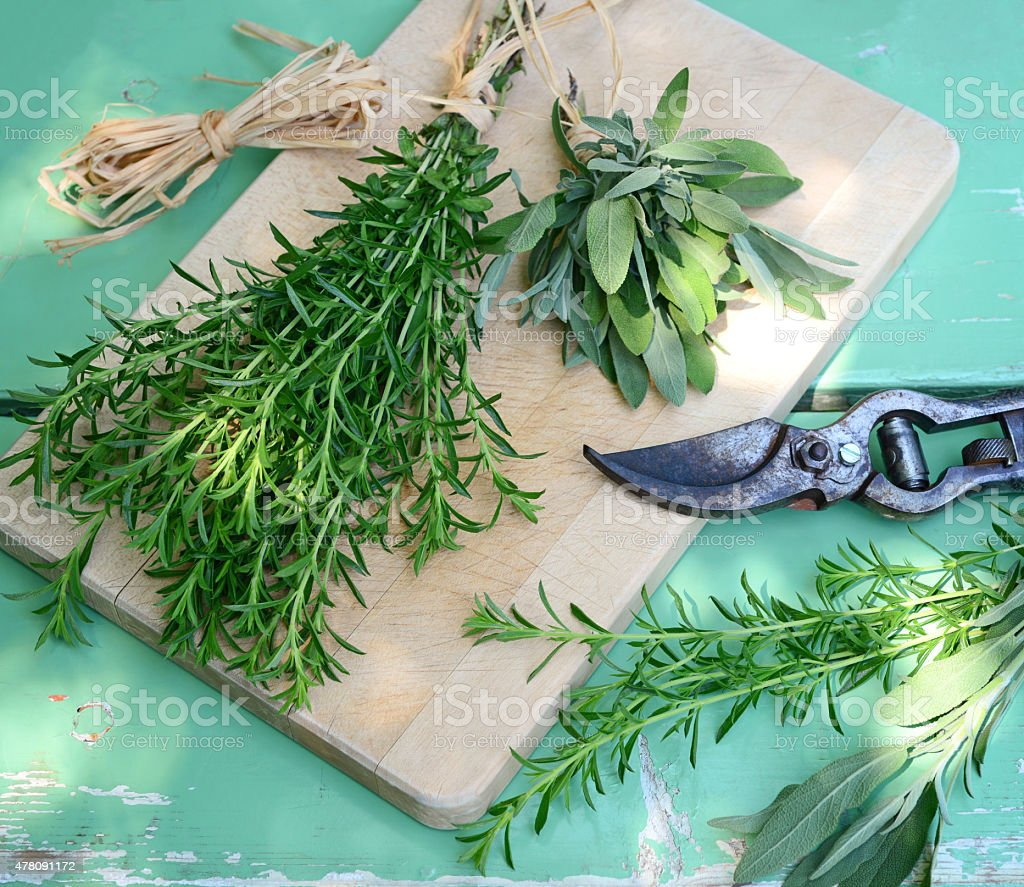 savory and sage stock photo