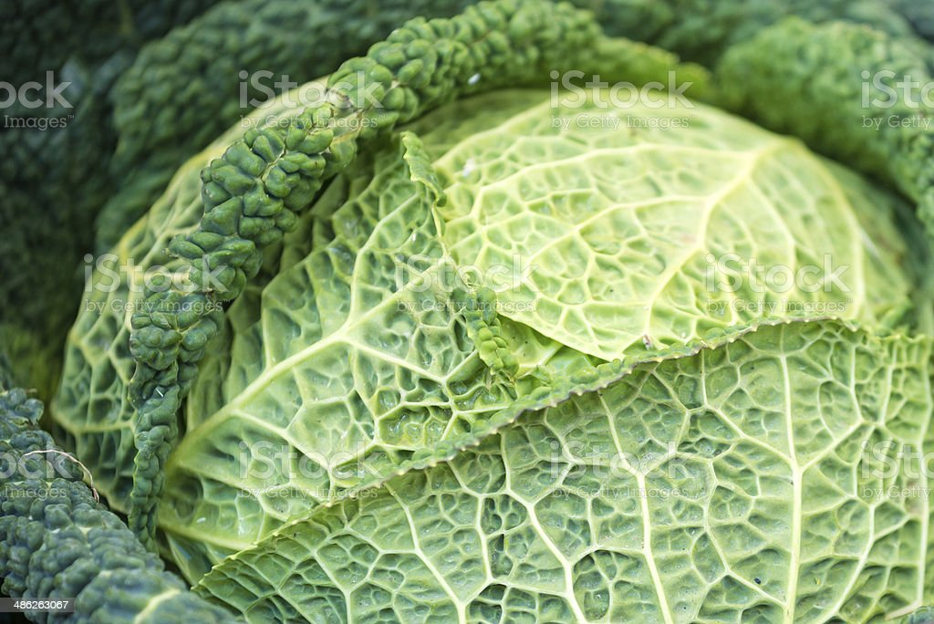 Savoy cabbage (Brassica oleracea sabauda) in street market royalty-free stock photo