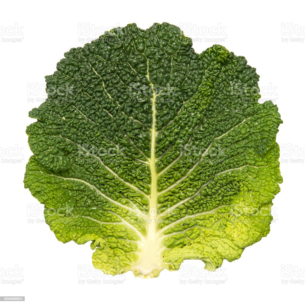 savoy cabbage leaf isolated on white stock photo