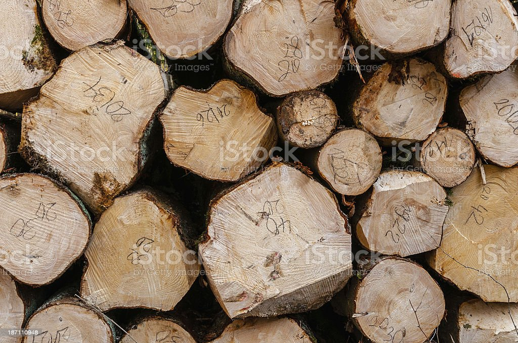 Sawed tree trunks in a stack royalty-free stock photo