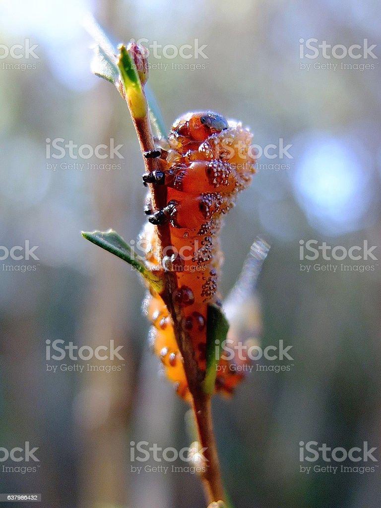 Sawfly Larvae stock photo