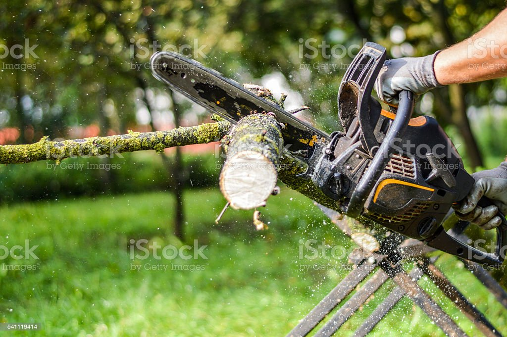 sawing branches stock photo