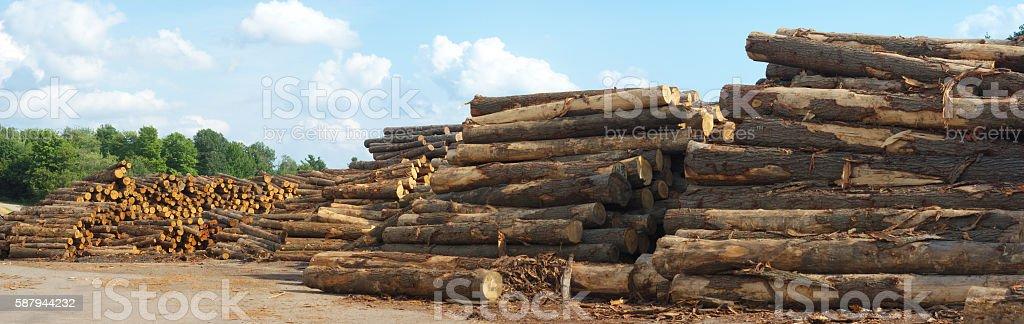 sawmill yard  logs woodpiles stacks stock photo