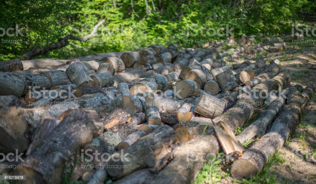 Sawn log on the background forest. stock photo