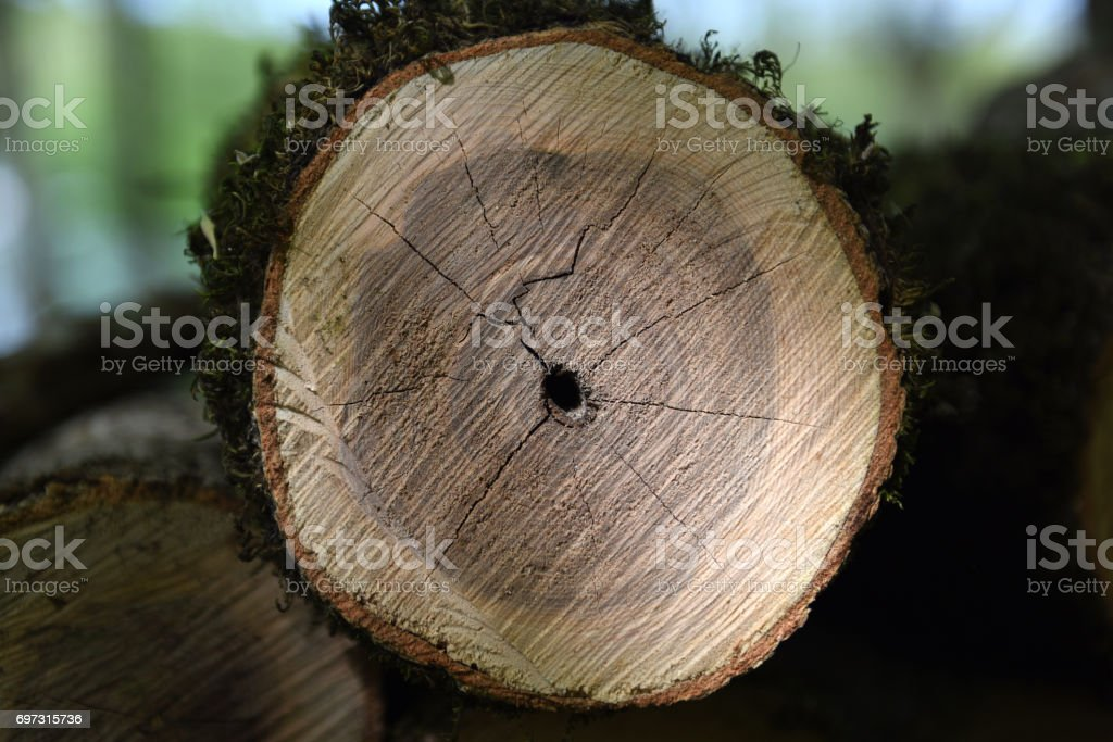 Sawn wood texture. stock photo