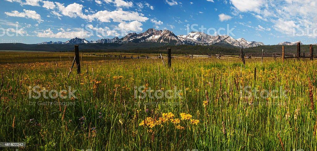 Sawtooth Wildflower bloom in Stanley Idaho stock photo
