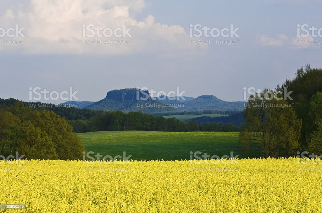 Saxon Switzerland (Germany) with a blowing canolafield stock photo