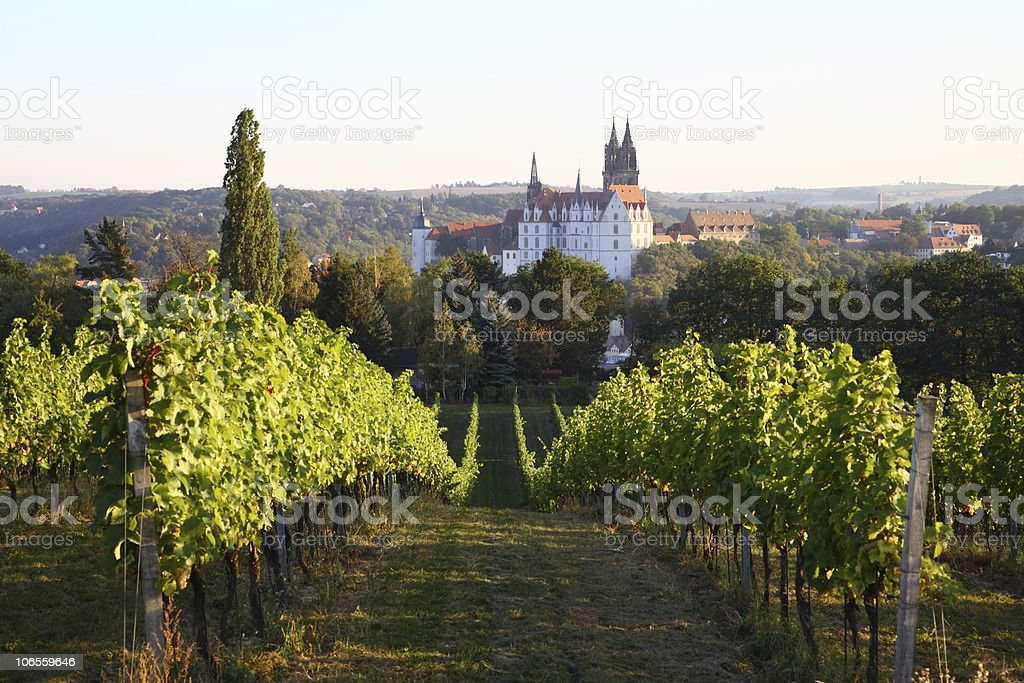 Saxony Meissen Albrechtsburg Vineyard in Fall stock photo
