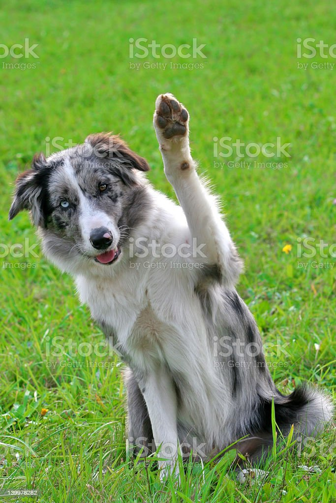 Saying hi stock photo