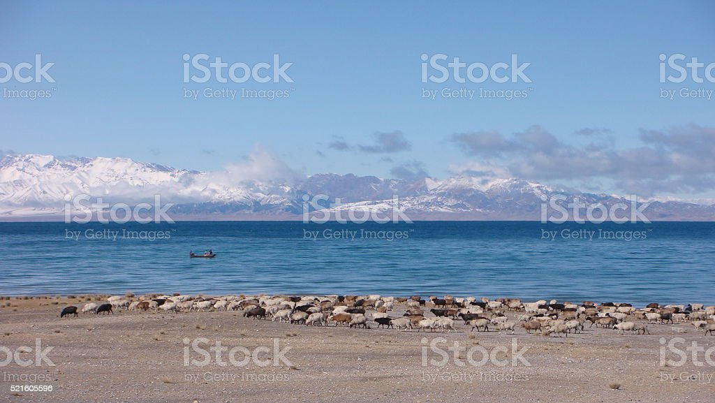 Sayram Lake_a paradise for flocks and herbs stock photo