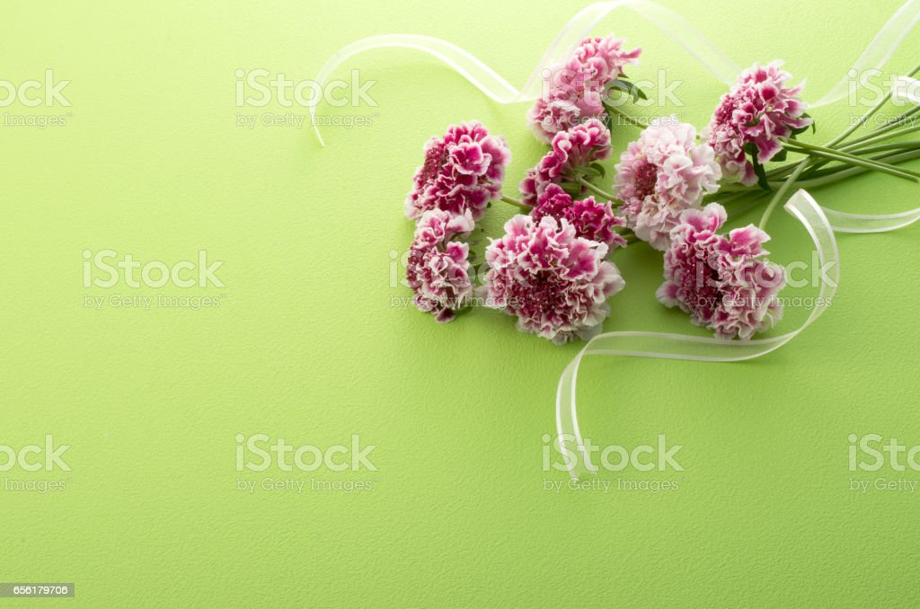 Scabiosa flowers and ribbon stock photo