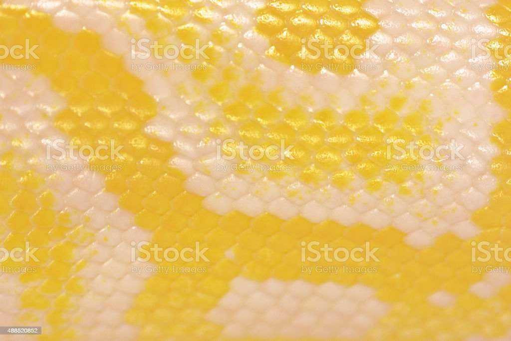 Scales of a golden python stock photo