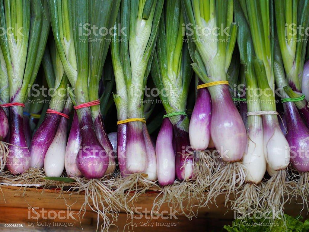 Scallions- Fresh Onion stock photo