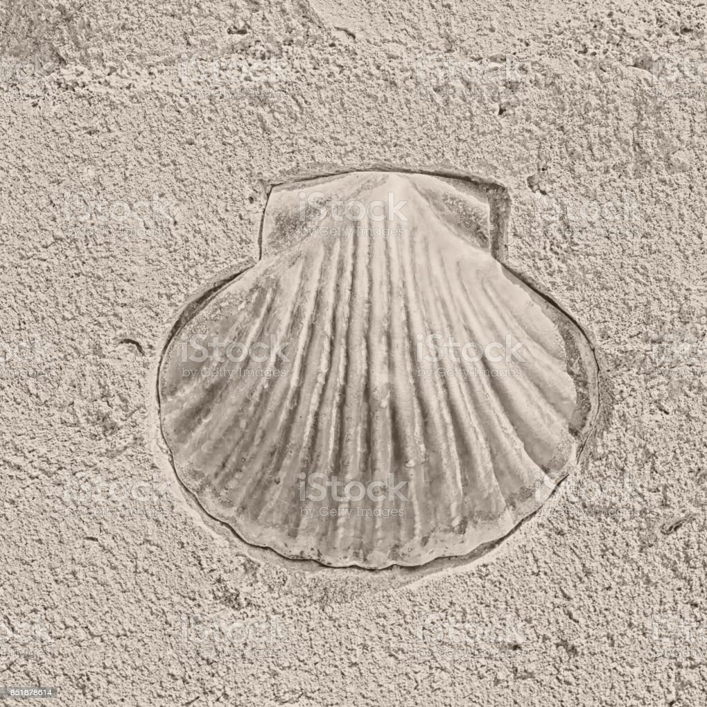 scallop as a symbol of pilgrims stock photo
