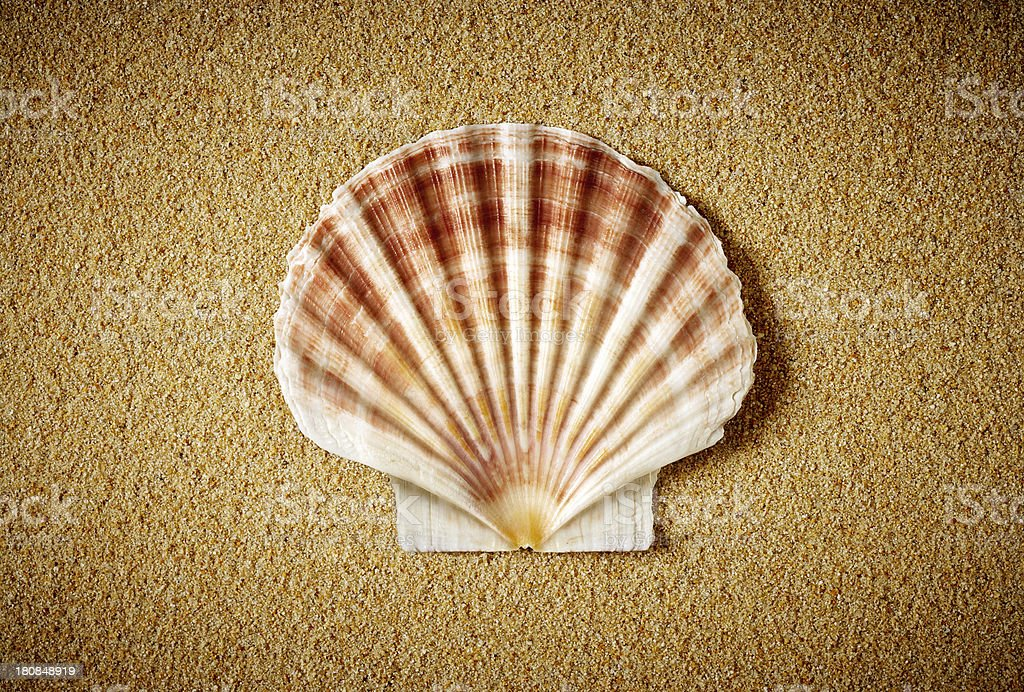 Scallop on the sand royalty-free stock photo