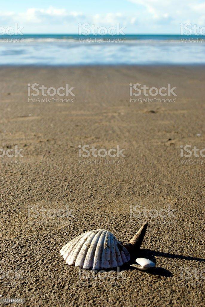 Scallop Shell Beachscape stock photo