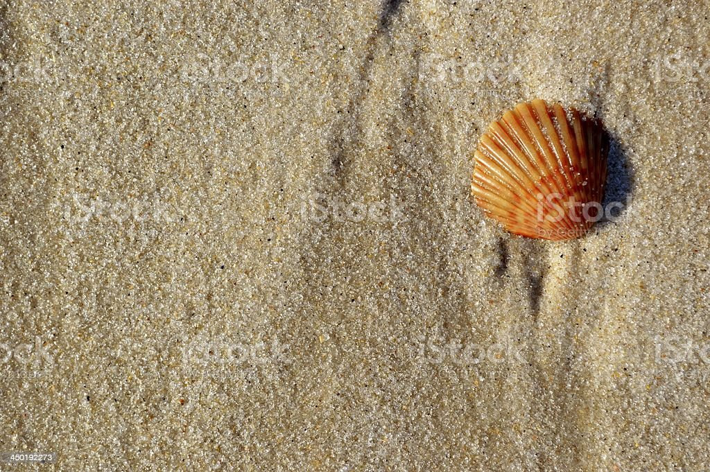 Coquillage sur le sable doux de Saint-Jacques photo libre de droits