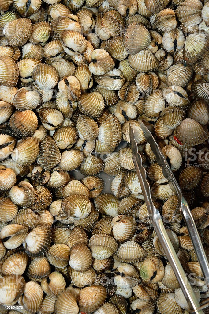 Scallops royalty-free stock photo