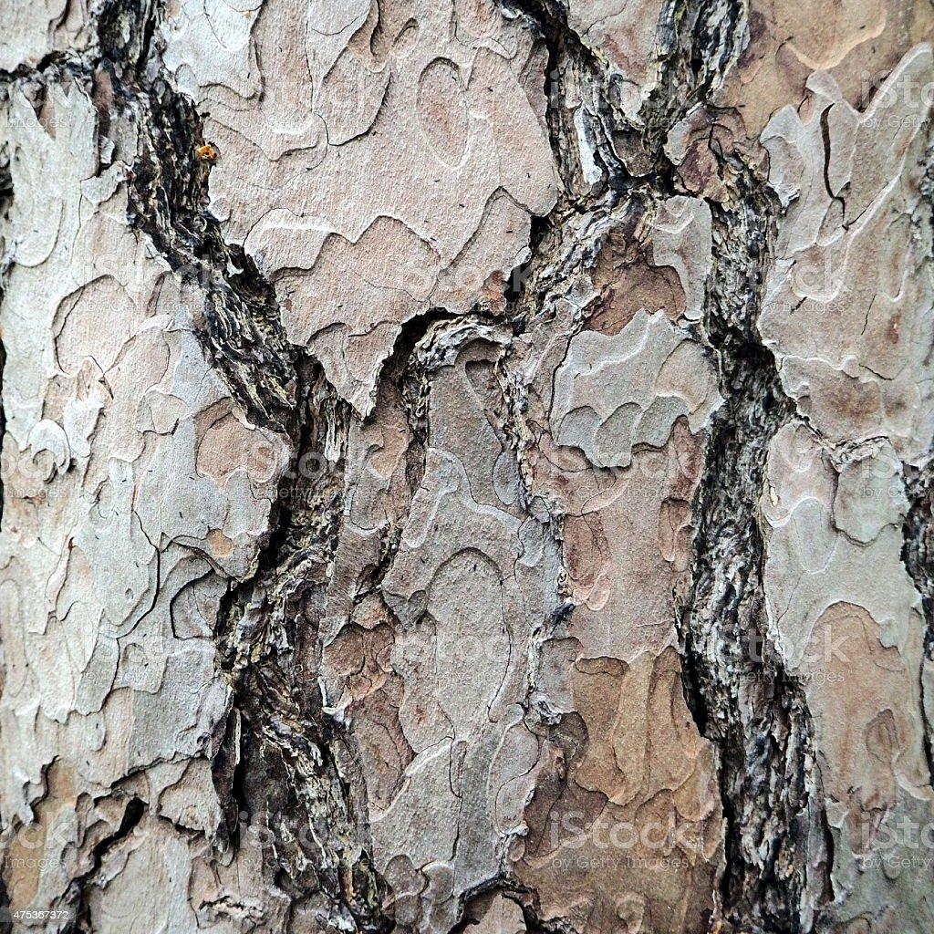 Scaly bark stock photo