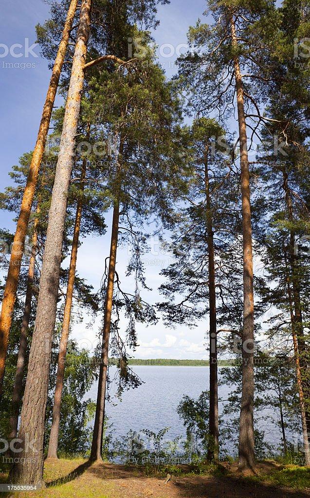 Scandinavia Finland Summer Lake royalty-free stock photo