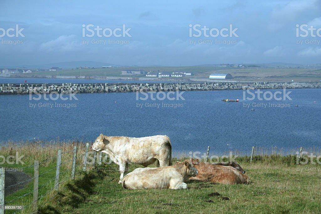 Scapa Flow stock photo