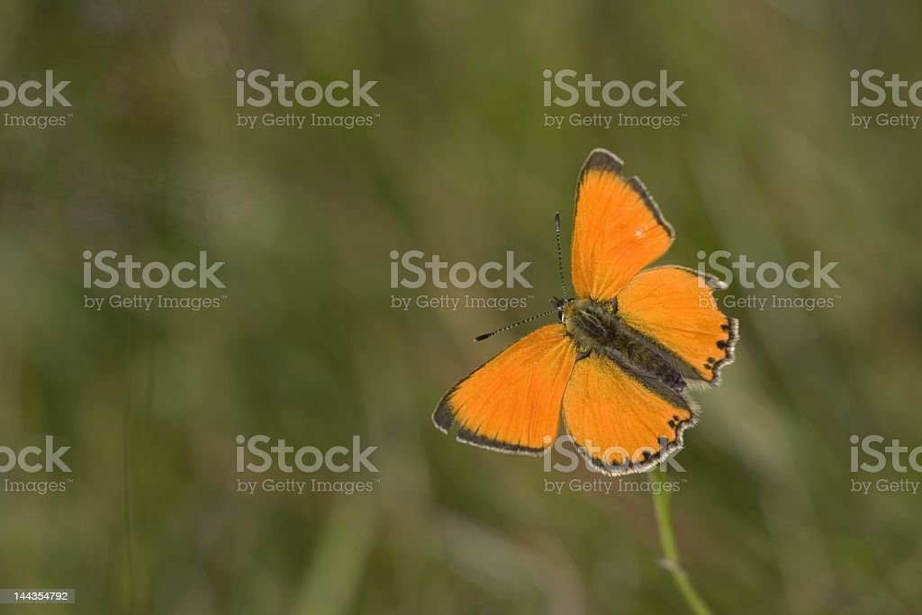 Scarce copper stock photo