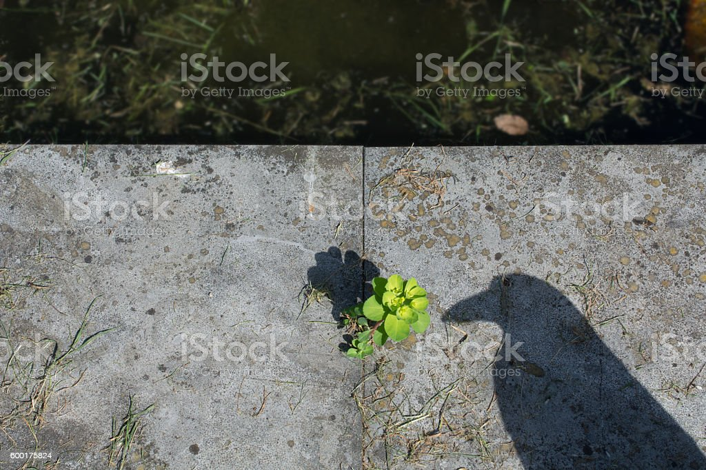 scare crow shadow on the edge of a pond stock photo