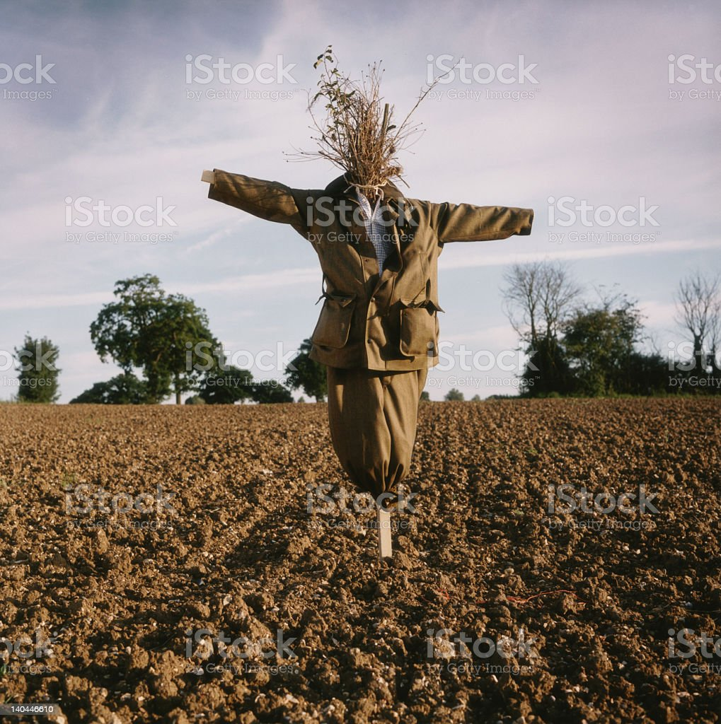 Scarecrow, Agriculture, Farming, Field, Food Production, Growth, Seeds, Guard, Sentinel stock photo