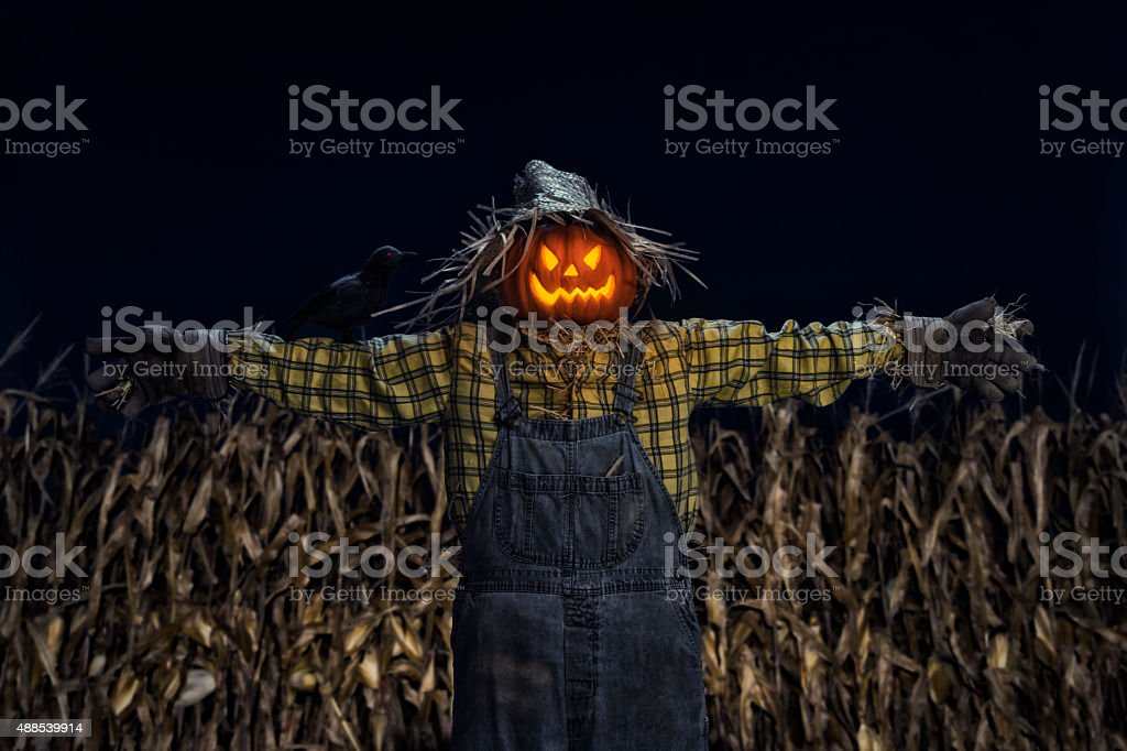Scarecrow and crow standing in corn field at night stock photo
