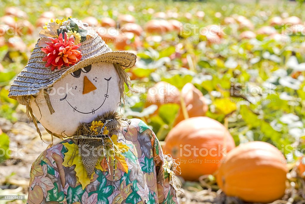 Scarecrow And Pumpkin Patch stock photo