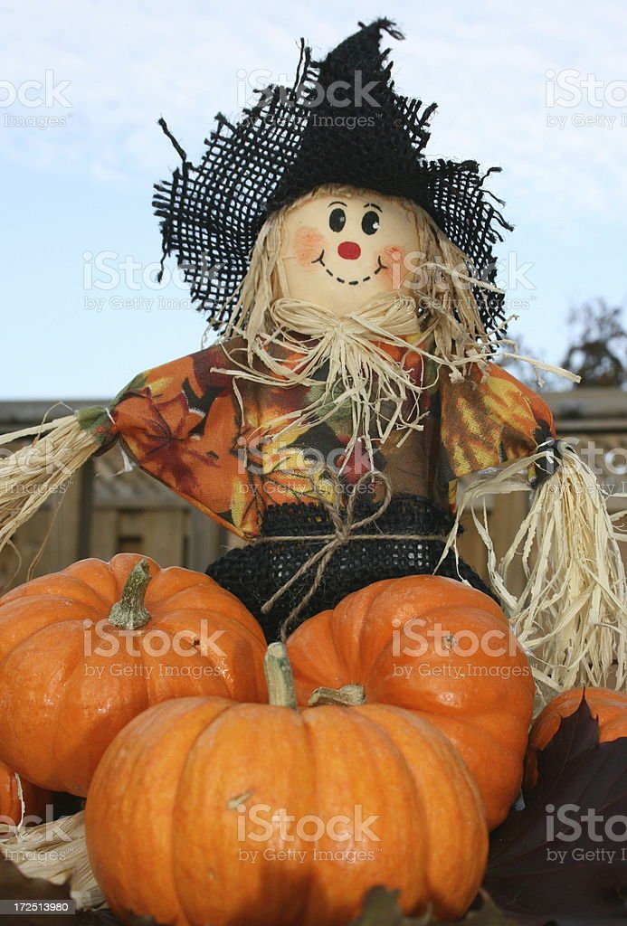 scarecrow and pumpkins stock photo