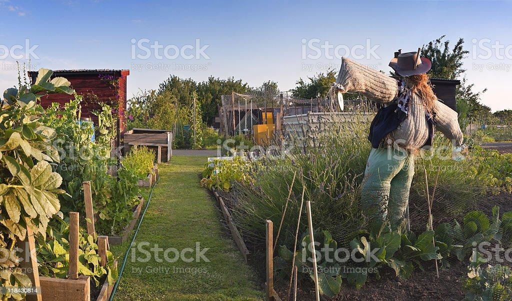 Scarecrow guarding allotment treasures. royalty-free stock photo