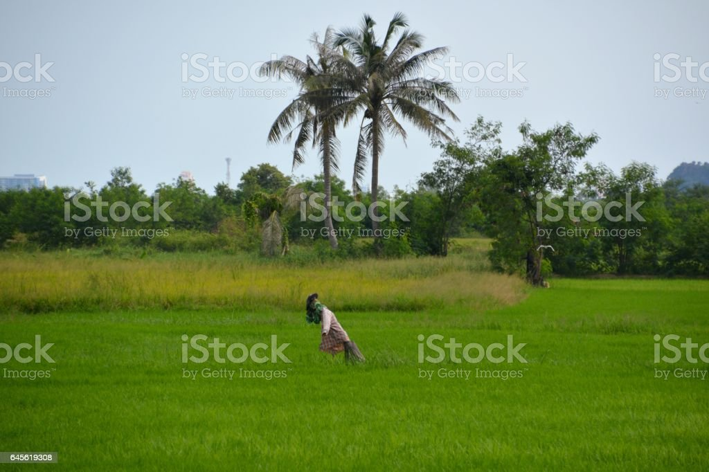Scarecrow in Khao Nang Phanthurat Forest Park, Thailand stock photo
