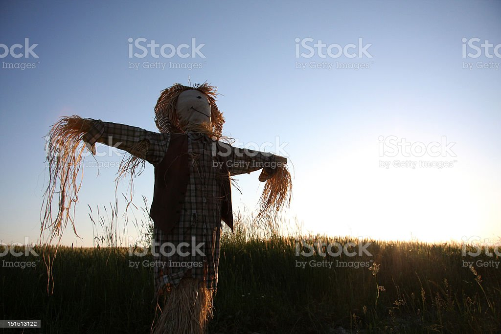 Scarecrow in the field stock photo