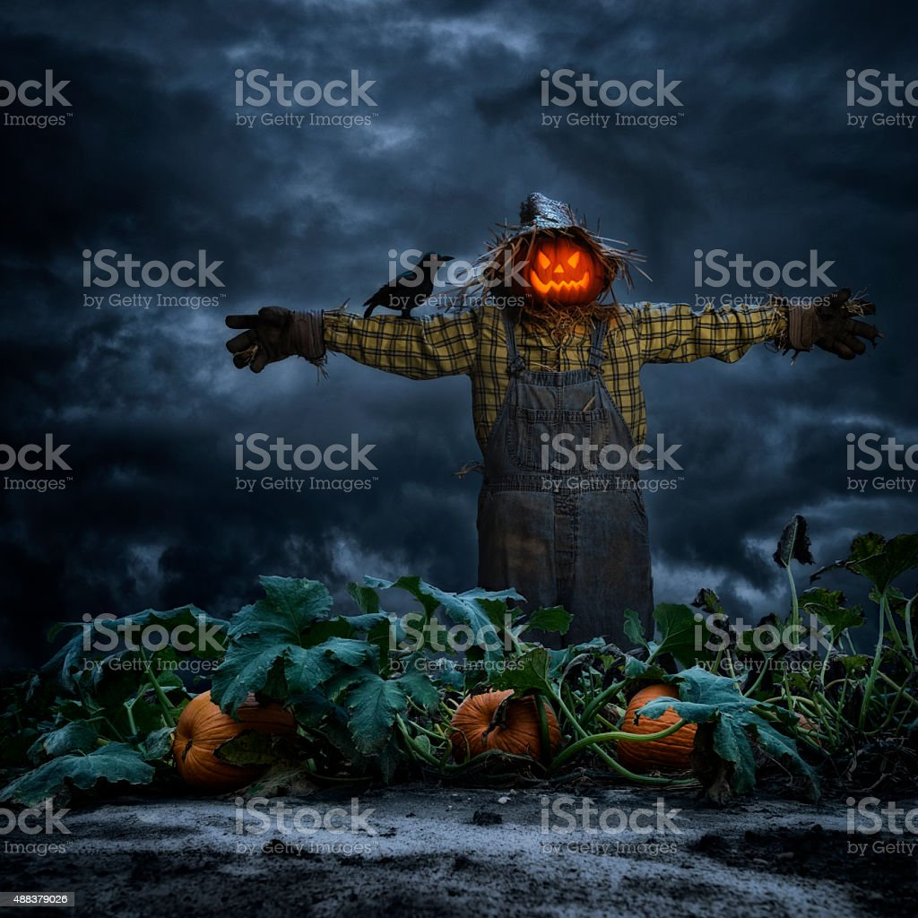 Scarecrow with crow standing in pumpkin patch field at night stock photo