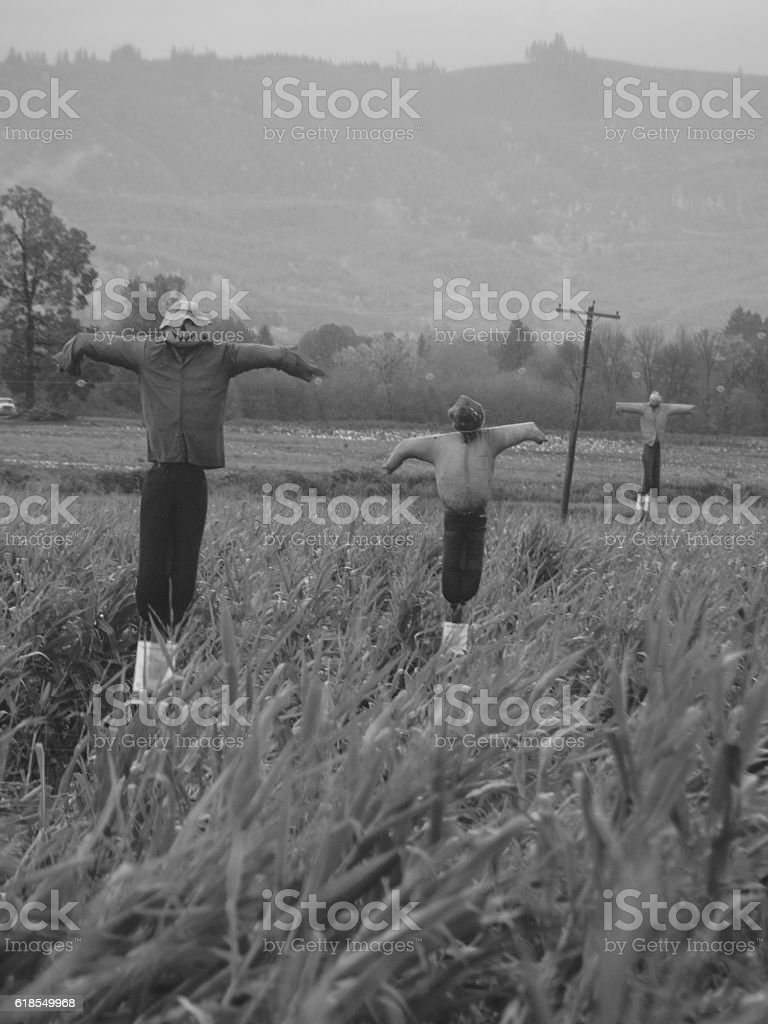 Scarecrows stock photo