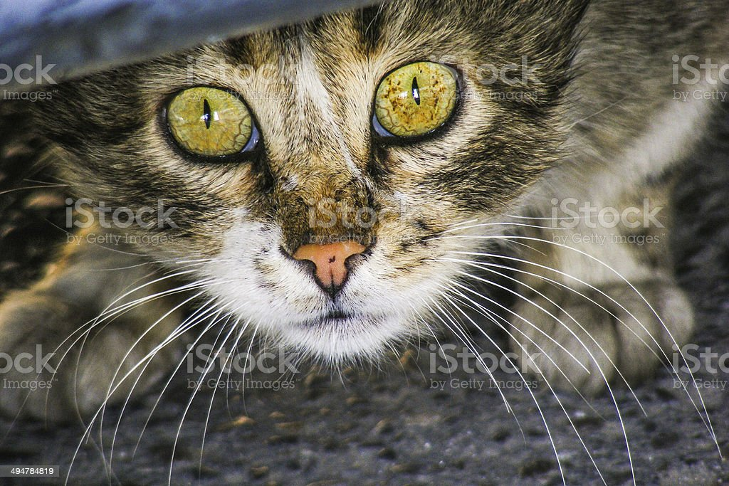 Ängstliche und apalled Katze unter dem Auto Lizenzfreies stock-foto