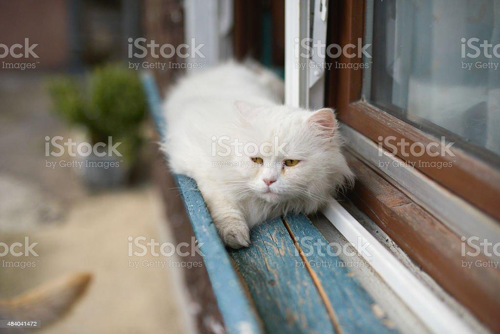 Scared cat stock photo