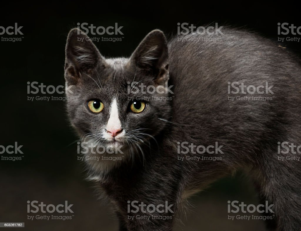Scared cat portrait stock photo