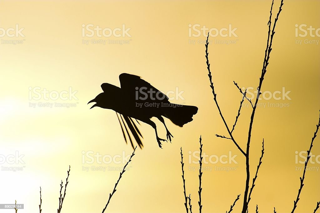 Scared crow royalty-free stock photo