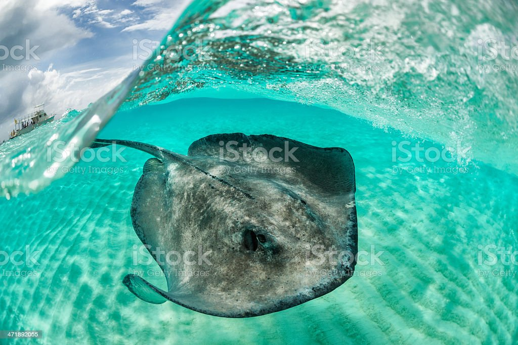 Scared from tourists royalty-free stock photo