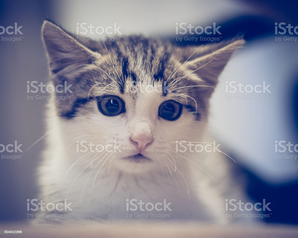 Scared kitten hiding at home stock photo