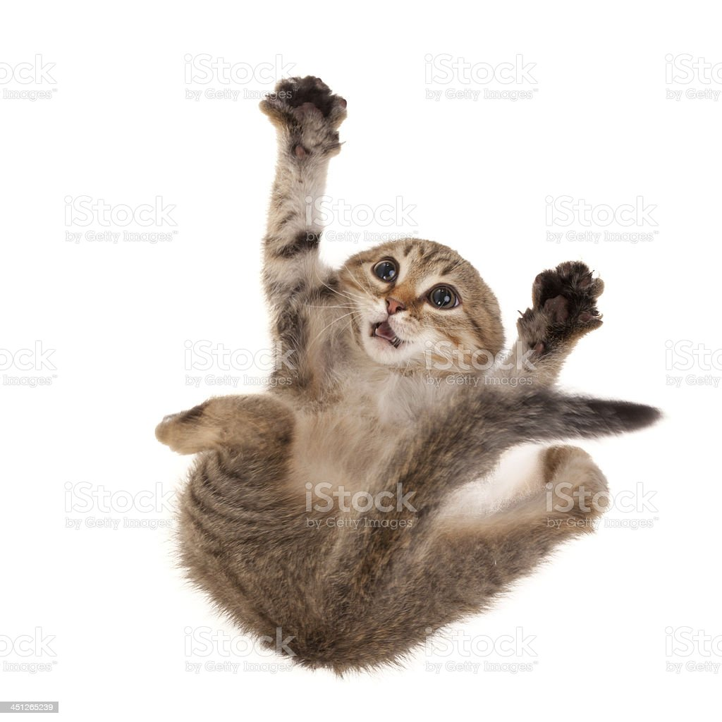 Scared kitten royalty-free stock photo