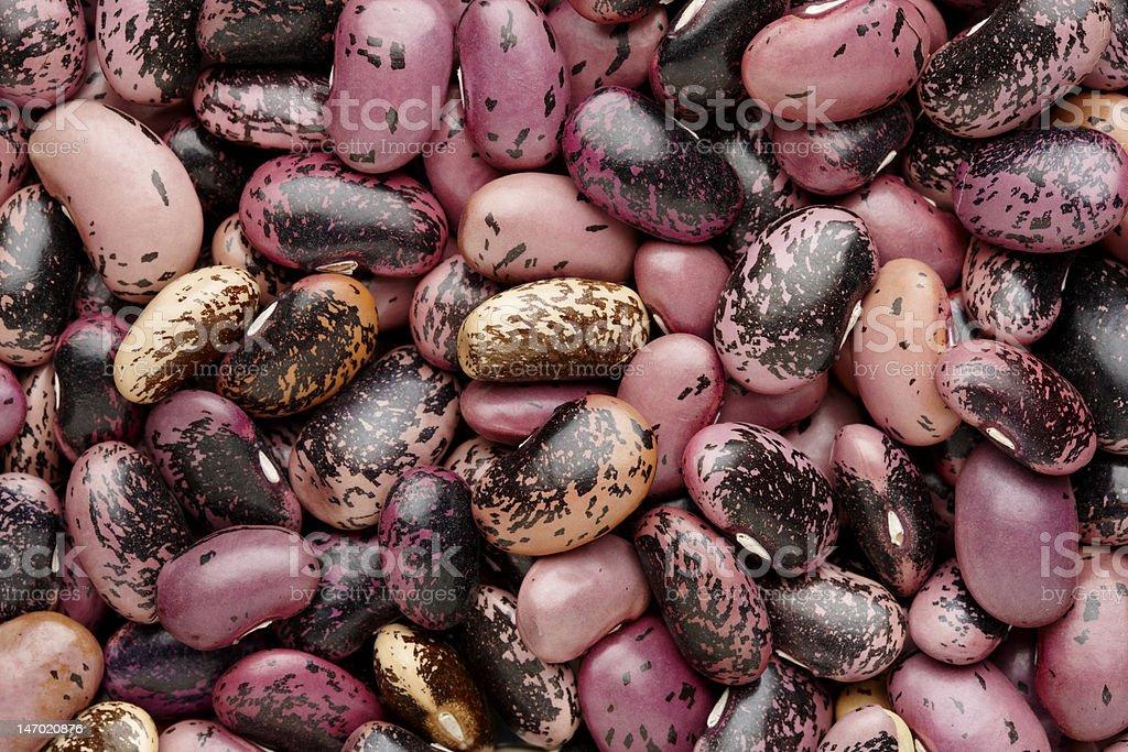 Scarlet Runner Beans stock photo